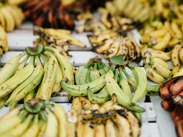 Bunches of plantains at a Jamaican food market.
