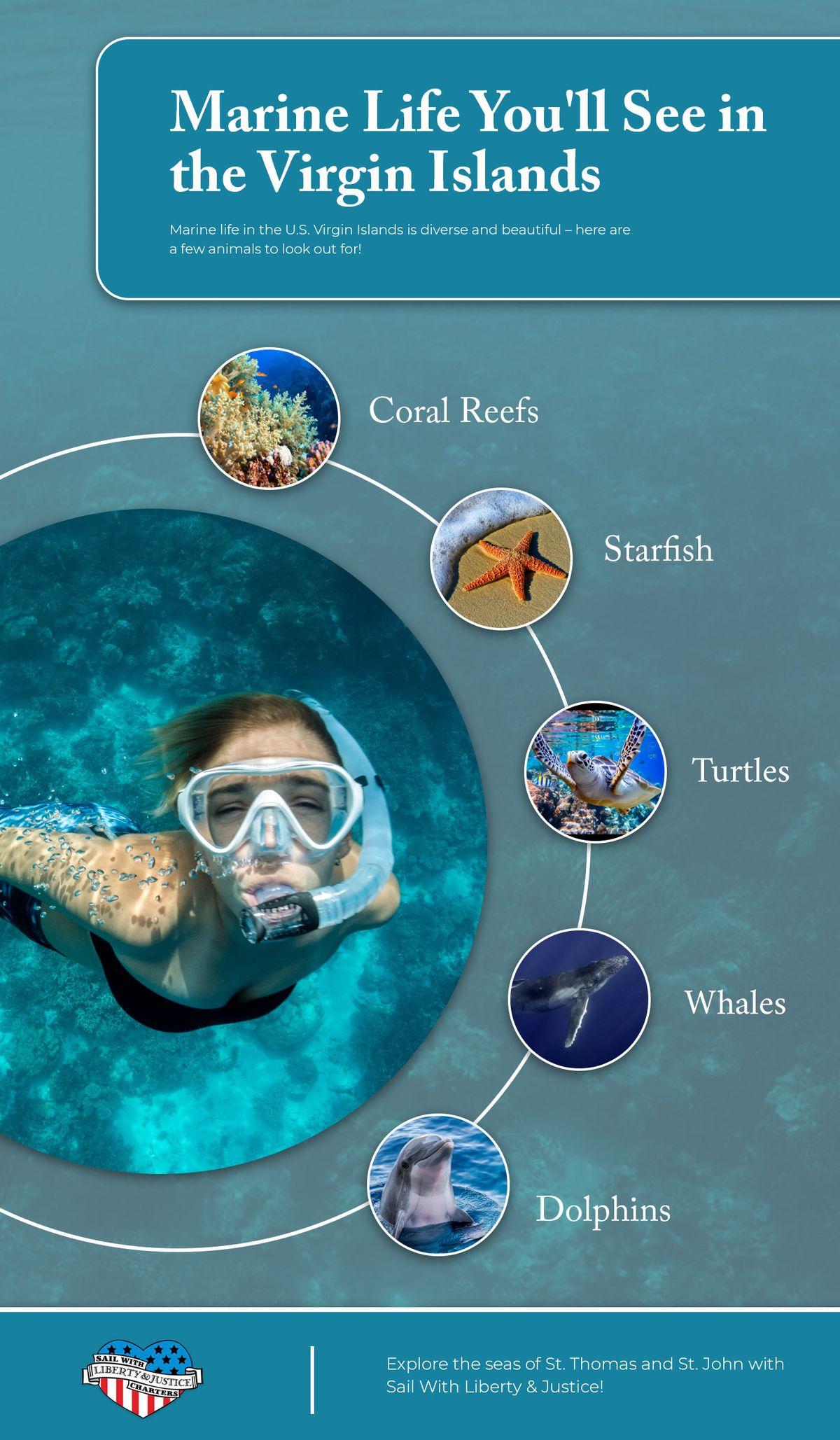Marine Life You'll See in the Virgin Islands.jpg