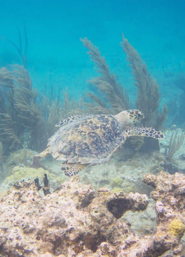 turtle-scaled.jpg