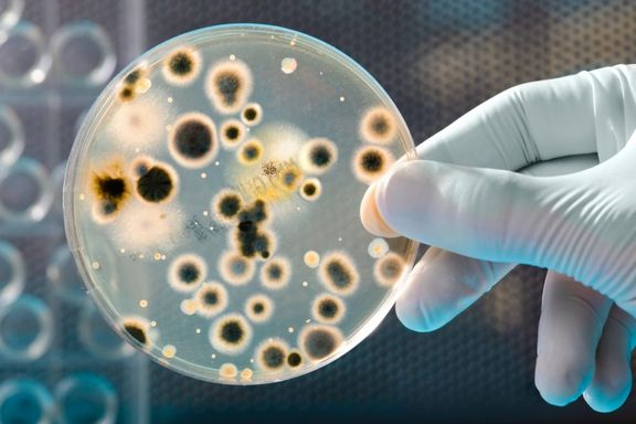 Bacteria Growth