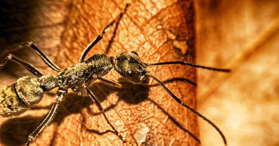 ftd-image-benefits-of-ongoing-pest-control-services.jpg