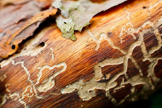 ftd-image-5-important-things-to-know-about-termites.jpg