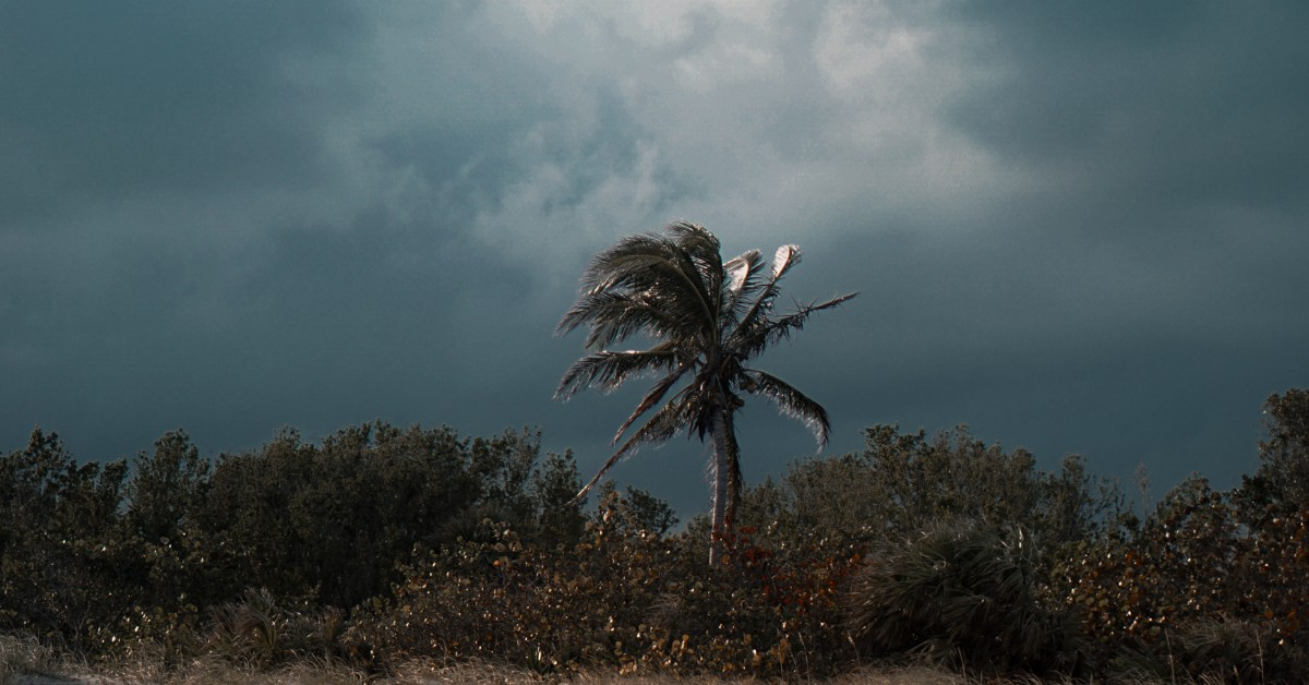 palm tree in a storm