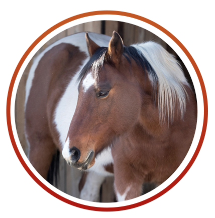 equine photo.png