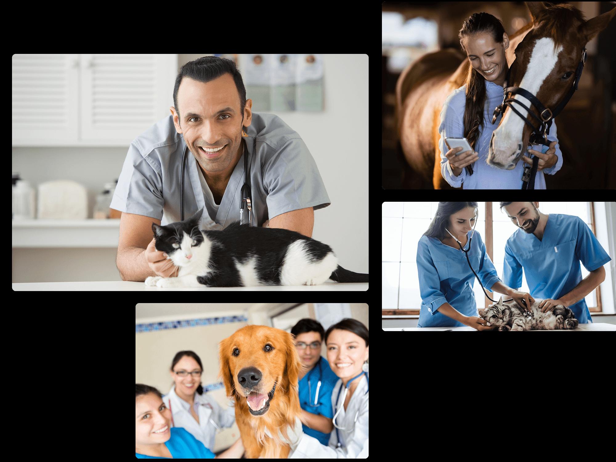 veterinarian marketing