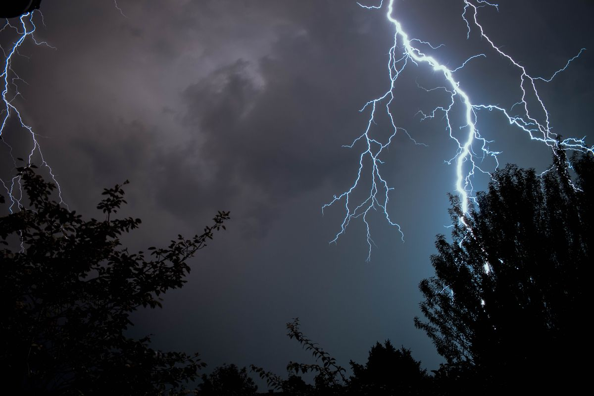 What to Do if Your Tree Is Struck by Lightning featured image.jpg
