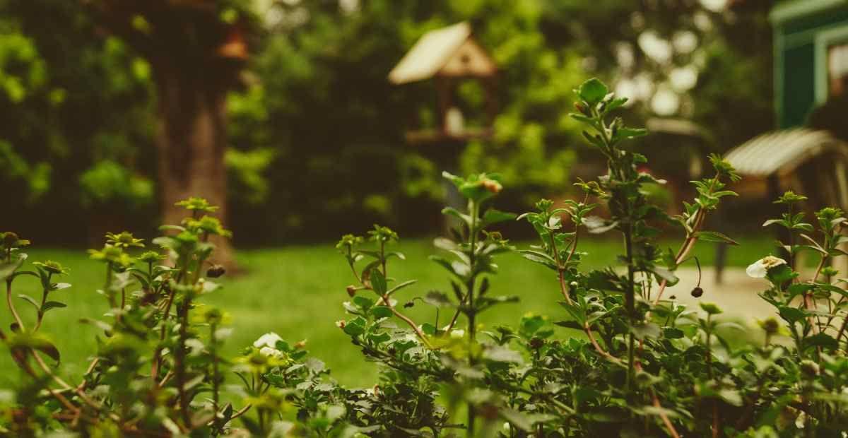 8 Incredible Backyard Garden Landscaping Ideas featured image Wise Oak.jpg