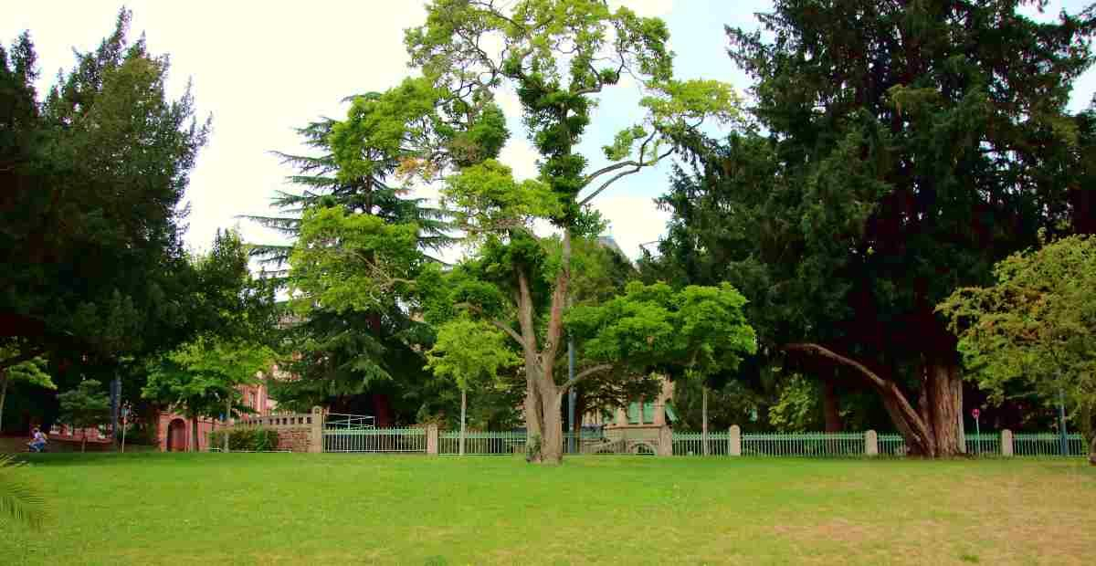 10 Tips on Making Sure Your Trees Stay Healthy Part II featured image.jpg