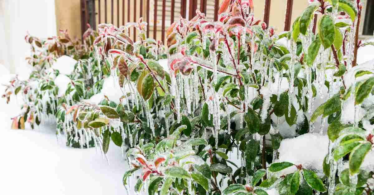 How to Protect Your Trees and Shrubs from Ice featured image.jpg