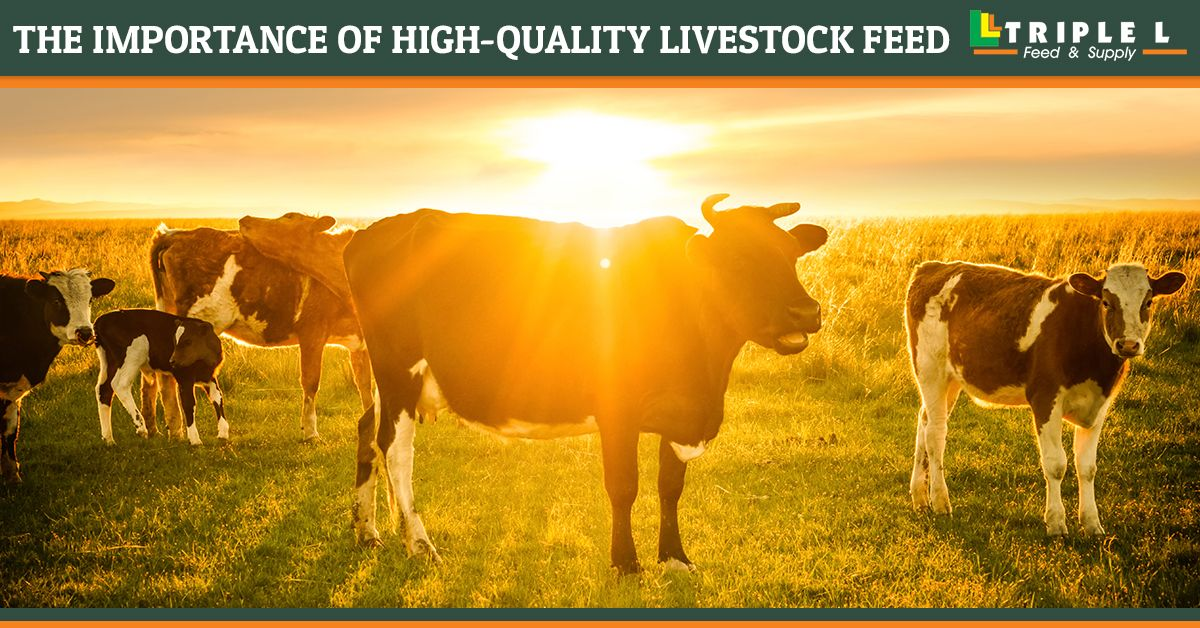 The-Importance-of-High-Quality-Livestock-Feed-5c89081a7ae59.jpg