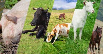 Animal-Clinic-Feat-Img-5e558876bd145.jpg
