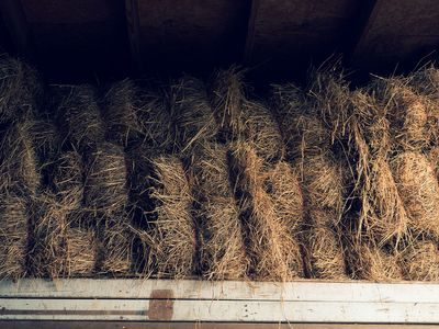Hay inside the barn