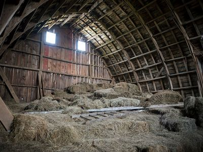 Dry hay in the barn