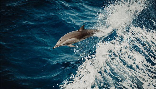 Dolphin Tour & Fishing Combo