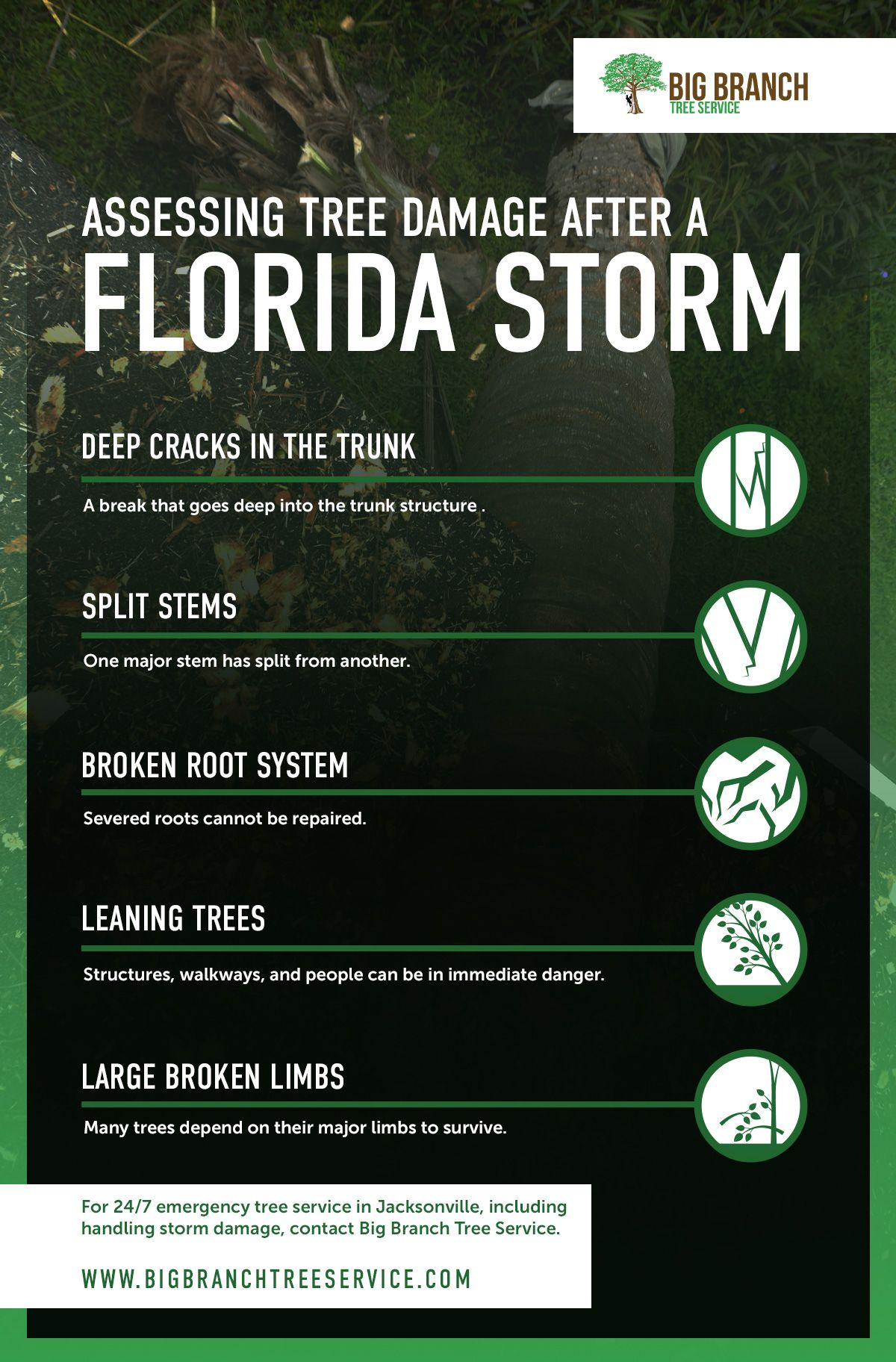 Assessing Tree Damage After a Florida Storm Infographic.jpg