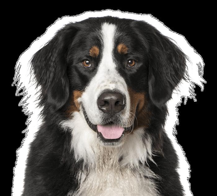 JM Kennels Colorado Dog Breeder