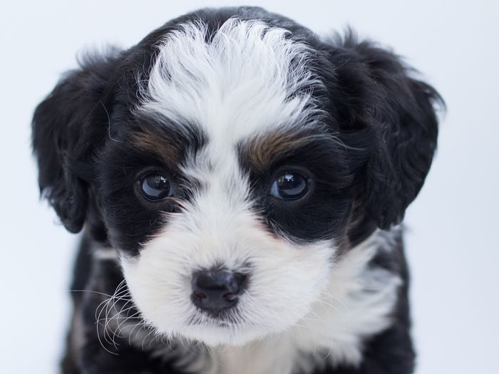 JM Kennels hand selects puppies for our ongoing breeding program
