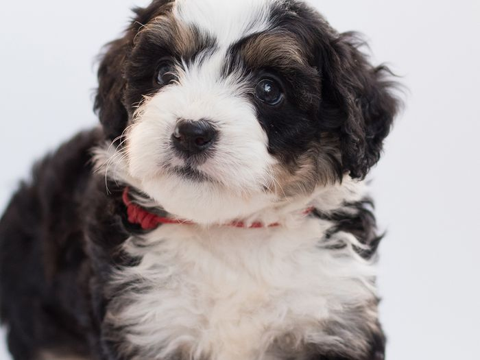 JM Kennels cares for puppies with the best health and cognitive abilities