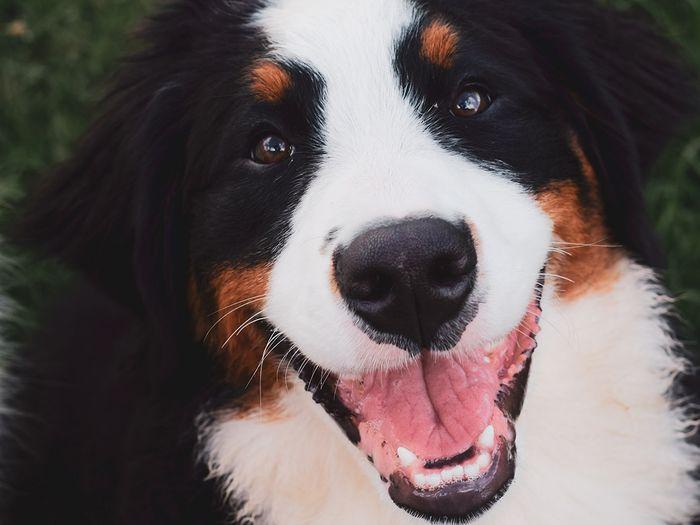 JM Kennels guarantees pups for 72 hours