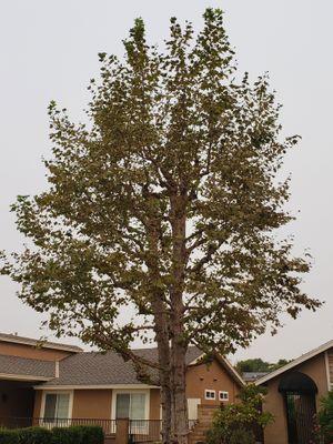 tree care page CTA 2-2.jpg