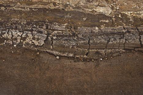 Soil side view