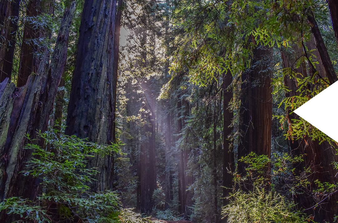 img_muirwoods.png