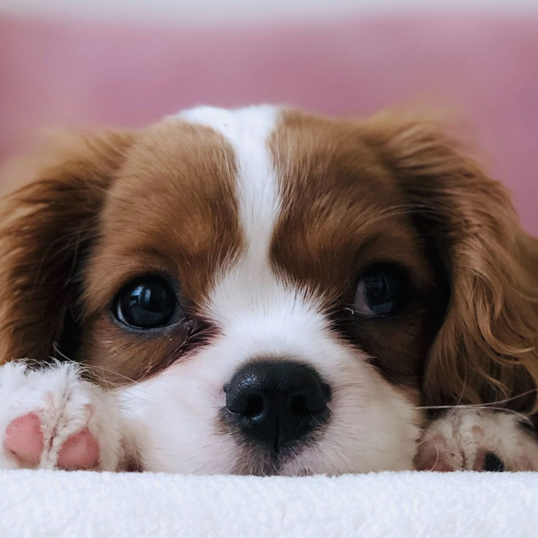 image of a puppy laying on a blanket