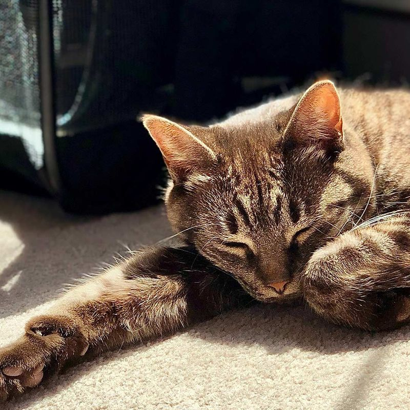 cute cat sleeping in the sun next to a soft case carrier