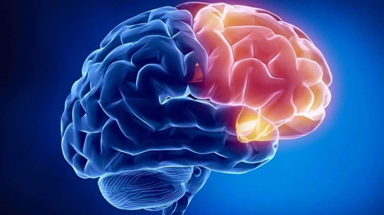 brain-1170x658.jpg