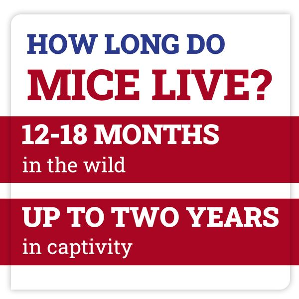 mice-fact.jpg