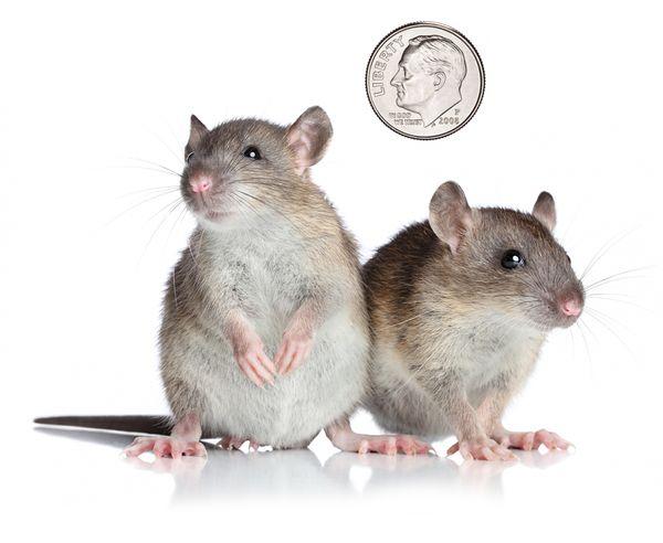 mouse-dime.jpg