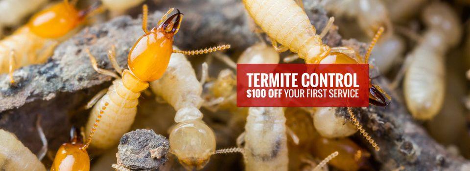 termite control.jpg