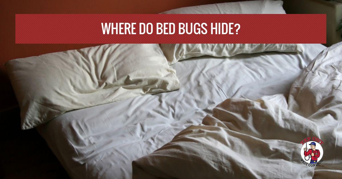 bed-bugs-hide-58f77ac69298e.jpg