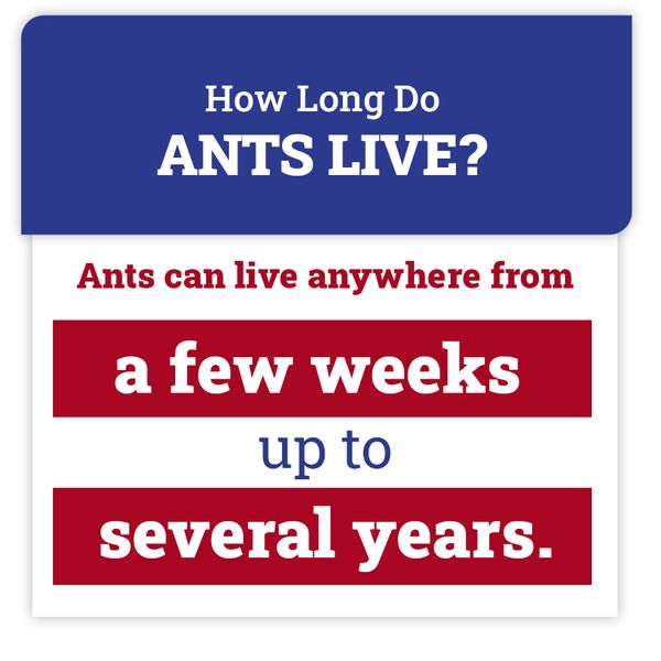 ant-facts.jpg