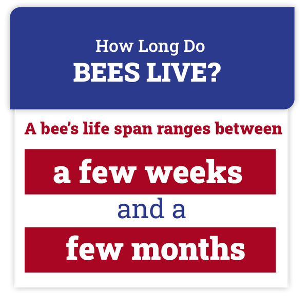 bee-facts.png