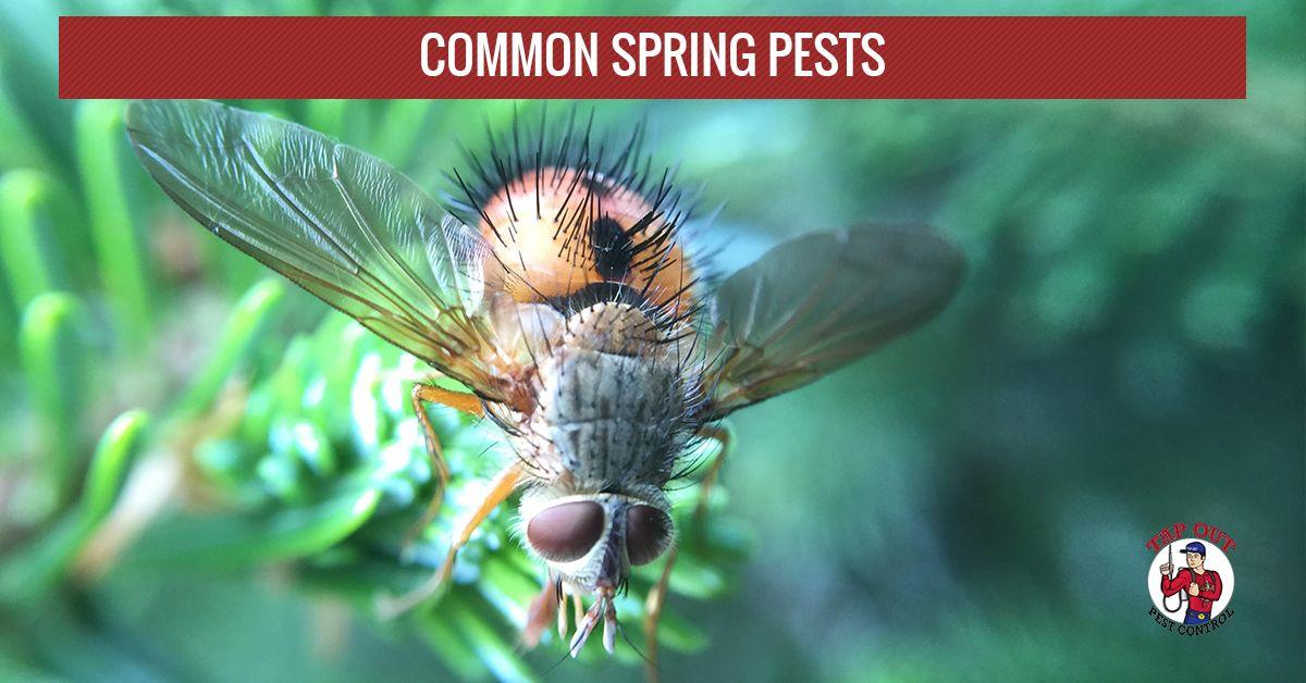 Spring-PestsB-591a00c07bae9.jpg