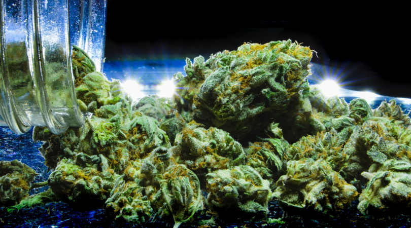 How to Choose the Best Cannabis Strain.png