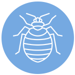 Icon of  a bug