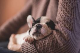 puppy-sleeping.jpg