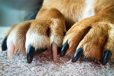 dog-paws.jpg