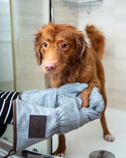 Dog Groomed.jpg