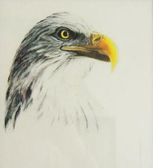 American Eagle-min.jpg