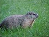 wildlife_img2.jpg
