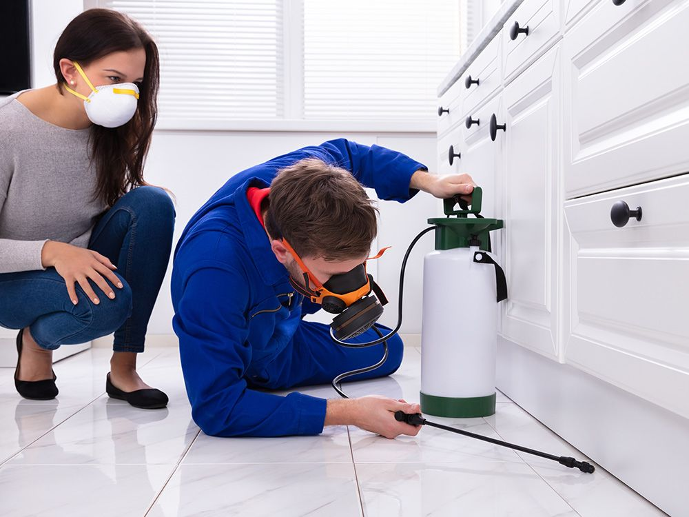 Accelerated & Cost-Effective Pest Control Solutions