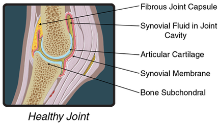 Diagram of Healthy Joint