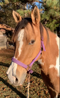 Image of Ginger the Horse
