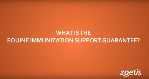 What is the equine immunization support guarantee?