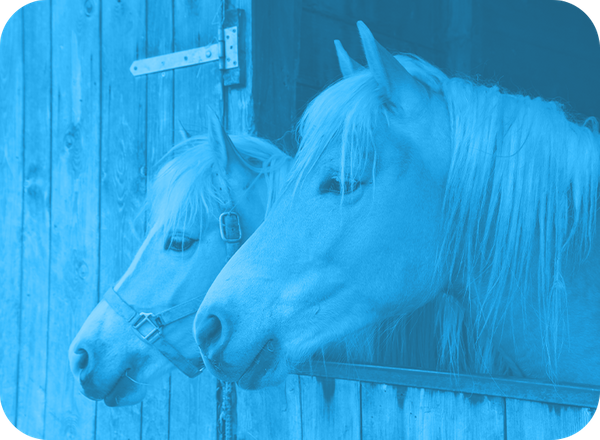 Equine Services Image