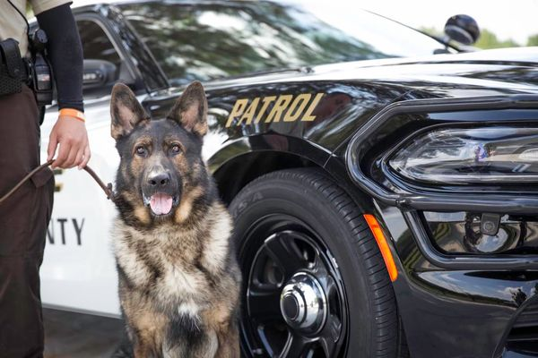 image of a police dog
