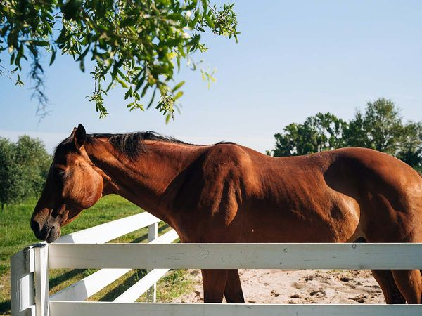 picture of a horse standing in pasture